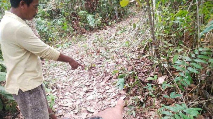 Bocah 10 Diperkosa Setelah Dibunuh di Kebun, Pelaku Keluarga Sendiri Ngakunya Dendam ke Ibu Korban