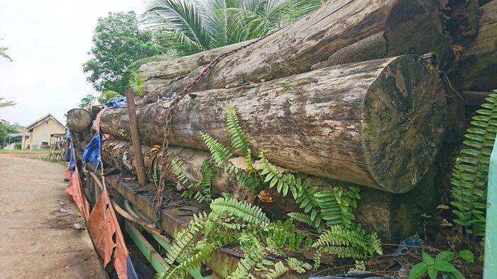 Dua Pembawa Kayu Olahan Hutan Jenis Veener di Merangin Dijemput Paksa
