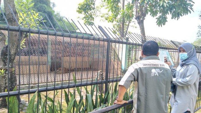 Mengenal Lebih Dekat dengan Uni dan Cinta yang Tinggal di Taman Rimba Jambi