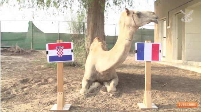 Ramalan Elang dan Unta untuk Pemenang Piala Dunia 2018, Yuk Lihat! Prancis Apa Kroasia