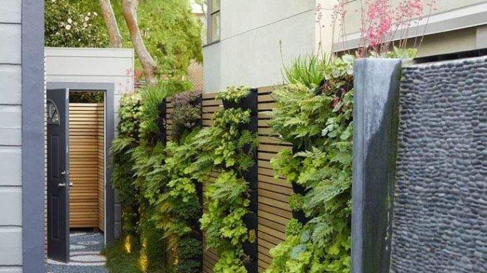 Menggagas Taman di Areal 1 x 2 Meter, Turunkan Suhu Ruangan Rumah dengan Taman