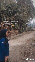 VIRAL TIKTOK! Mahasiswi Marah-marah ke Kambing, Ternyata Ini Kisah Sebenarnya