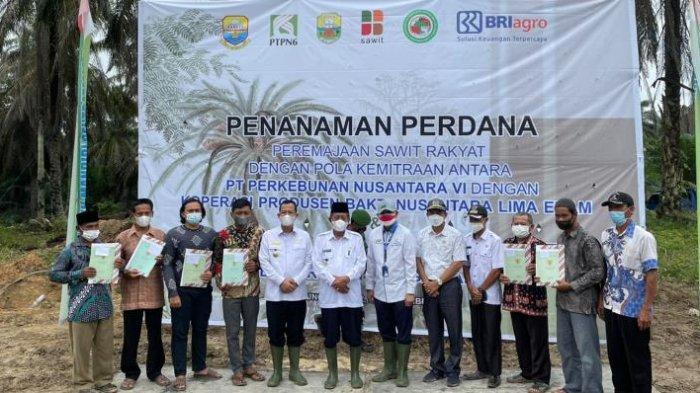 Wakil Gubernur Jambi Abdullah Sani Apresiasi PTPN VI Gelar Peremajaan Sawit Rakyat