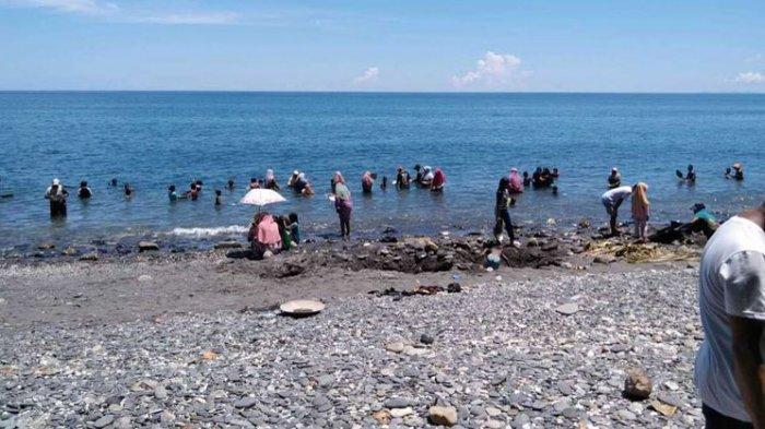 Warga Desa Tamilow di Maluku Berbondong-bondong ke Pantai Mendulang Emas Yang Tetiba Banyak Muncul