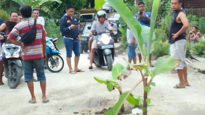 Jalan Berlobang, Warga Salam Buku Tanam Pisang, PUPR Merangin Perintahkan Kontraktor Perbaiki