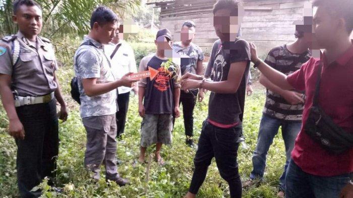 Temukan 2 Kg Ganja Siap Edar, Polisi Temukan Kebun Ganja yang Sudah Dipanen di Belakang Rumah Pelaku