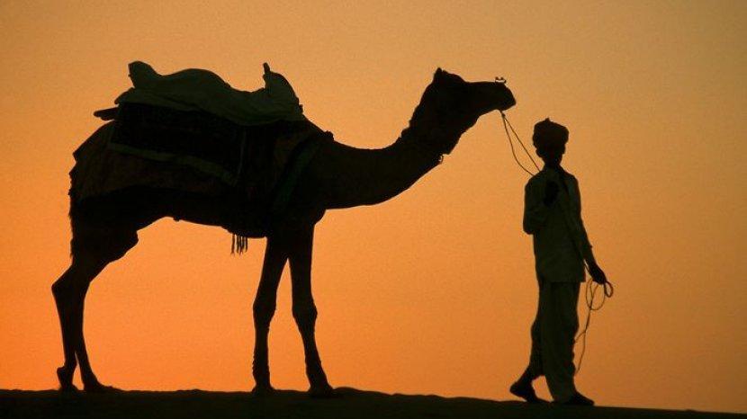 ilustrasi-unta-di-padang-pasir.jpg
