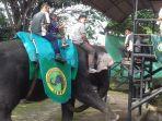 12062019_gajah.jpg