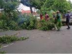 160920_pohon-tumbang.jpg