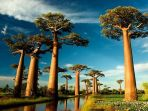 18062018_pohon-baobab_20180618_221237.jpg