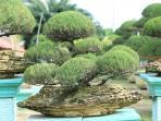 20092016_bonsai3_20160920_155404.jpg