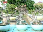 20092016_bonsai5_20160920_155724.jpg