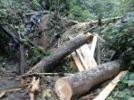 25092016_illegal-logging_perambah_20160925_194502.jpg