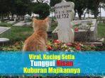 27122019_kucing.jpg