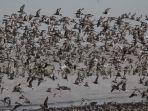 ada-sekira-72-jenis-burung-migran-dari-belahan-dunia.jpg