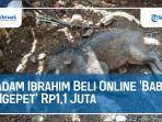 adam-ibrahim-beli-online-babi-ngepet32.jpg