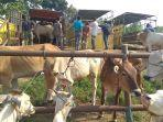 aktivitas-di-pasar-ternak-di-kabupaten-batanghari.jpg
