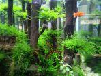 akuarium-aquascape87.jpg
