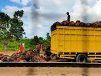 angkutan-tbs-kelapa-sawit-batanghari.jpg