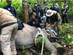 bksda-jambi-evakuasi-gajah-di-tebo.jpg