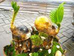 bonsai-kelapa-milik-reno87.jpg