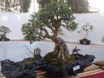 bonsai_20180818_133816.jpg
