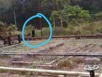breaking-news-heboh-beruang-berkeliaran-di-kebun-warga-di-sengeti-kabupaten-muarojambi.jpg