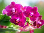bunga-anggrek-123.jpg