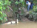 evakuasi-buaya-desa-kebon-ix-kecamatan-sungai-gelam-kabupaten-muarojambi.jpg