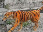 foto-anjing-yang-dicat-mirip-harimau-di-malaysia-menjadi-viral.jpg