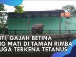gajah-taman-rimba-mati-diduga-diracun.jpg