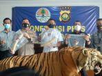 harimau-sumatera-dan-gading-gajah.jpg
