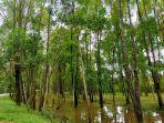 hutan-produksi-perusahaan-23.jpg