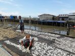 ikan-asin-menjemur-ikan-nelayan-tungkal_20181031_175851.jpg