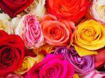 ilustrasi-9-warna-bunga-mawar.jpg