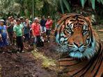ilustrasi-harimau-sumatera-bksda-riau.jpg