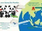 indonesia-akan-menerima-dua-panda-dari-tiongkok_20170926_183118.jpg
