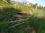 kawanan-gajah-rusak-ladang-di-wilayah-sarolangun.jpg