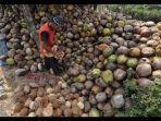 kelapa-petani.jpg