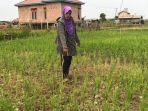 kemarau-dan-kesulitan-air-petani-di-muarojambi-khawatir-tanaman-padi-gagal-panen.jpg