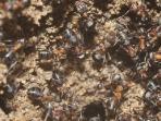 koloni-semut-di-bungker-nuklir_20160922_095245.jpg