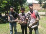 komunitas-ralu-jambee-menangkap-ular.jpg