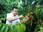 kopi-robusta-merangin-miliki-ig-al-haris-tak-bisa-lagi-diklaim-kopi-daerah-lain.jpg