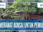 merawat-bonsai-untuk-pemula.jpg