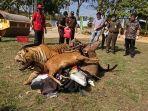 offset-harimau-dan-beruang-dibakar-kejari-jambipemusnahan-barang-bukti-dari-60-perkara-yang-ingkrah.jpg