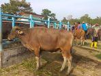 pasar-ternak-kabupaten-batanghari.jpg