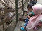pengunjung-memberi-makan-rusa-di-taman-rimba-zoo-kota-jambi.jpg