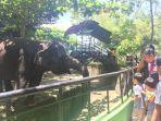 pengunjung-taman-rimba-jambi-sedang-melihat-gajah_20180401_133633.jpg