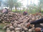 petani-kelapa-kopra-di-kabupaten-tanjung-jabung-timur-ja.jpg