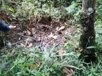 petugas-saat-menemukan-bangkai-babi-dan-ular-di-desa-suo-suo.jpg